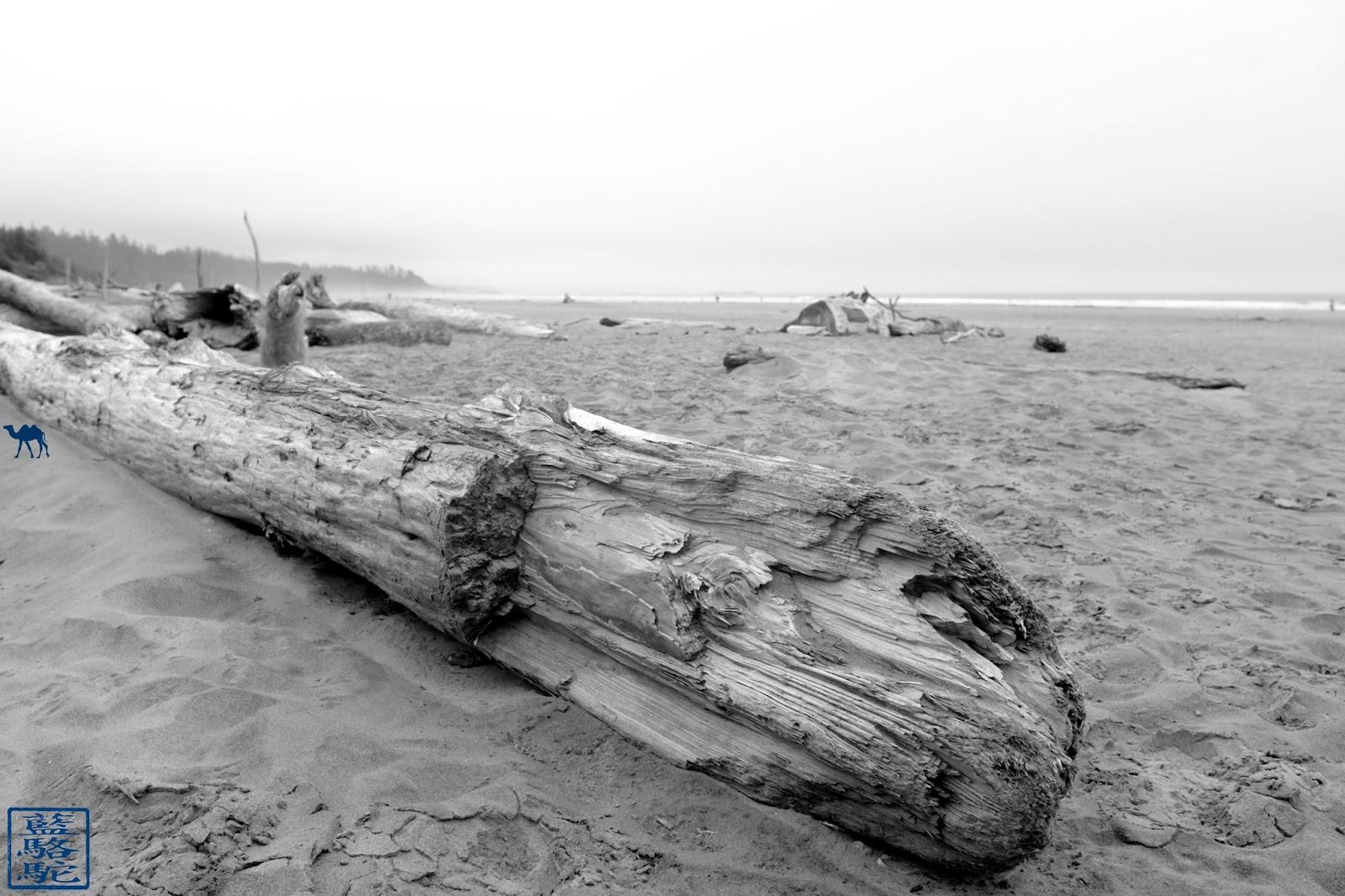 Le Chameau Bleu - Long Beach Tofino