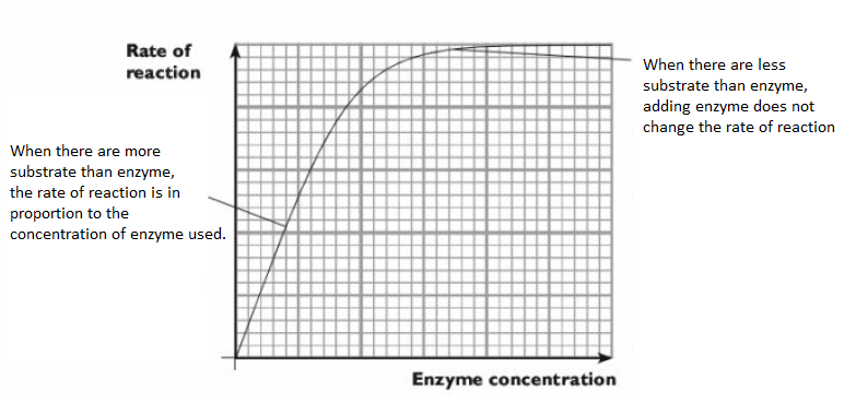 Factors affecting the rate of catalase
