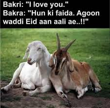 Funny Bakra Eid Pictures