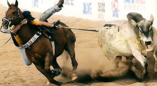 Resultado de imagem para Vaqueiro é derrubado por boi durante vaquejada e vai parar