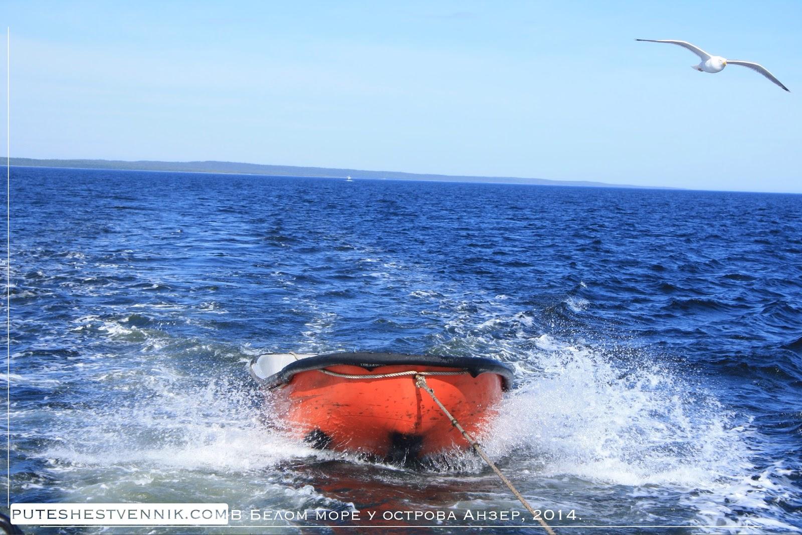 Лодка и чайка в Белом море