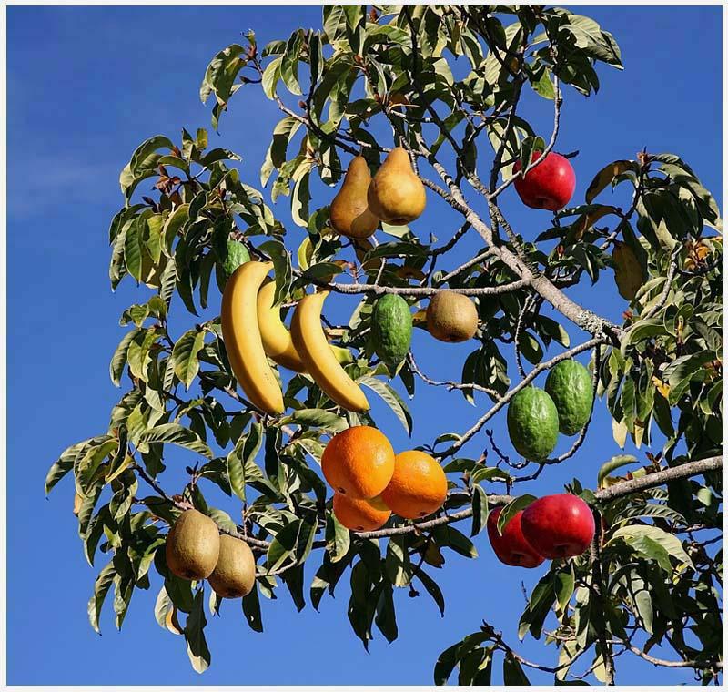 Fruit Cocktail Tree 71