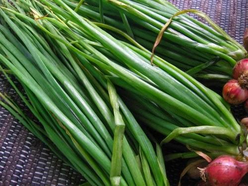 daun daunan apotik hidup untuk herbal daun bawang merah