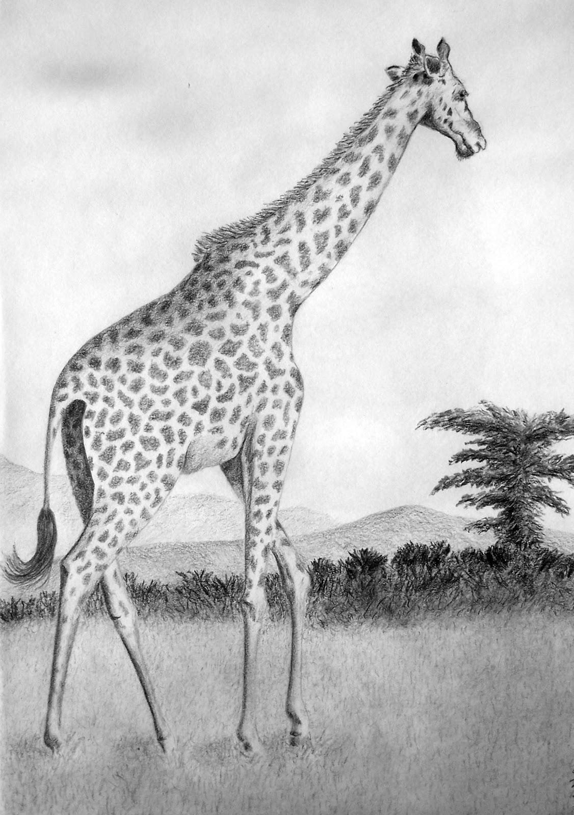 Jim Hartlage Art: January 2013 Cool Giraffe Drawing