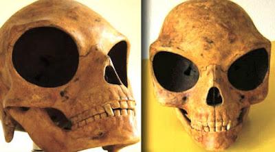 cranio alien dinamarca