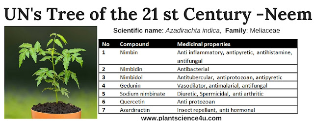 Tree of the 21st Century Neem (Azadirachta indica)