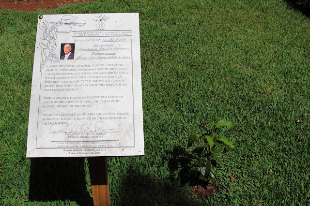 a tree planted in Funchal by the President of the Republic