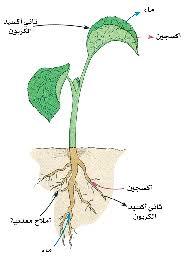 دليل المعلم أحياء بنية النبات ووظائفه محلول