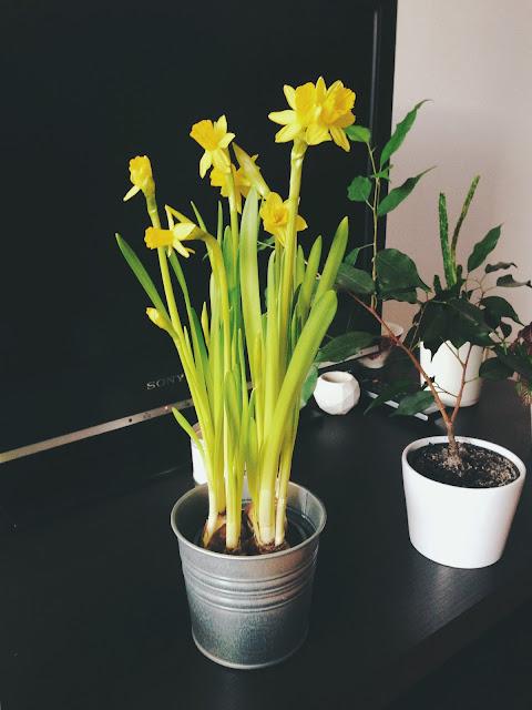 Narcisy od priateľa nám priniesli domov jar.