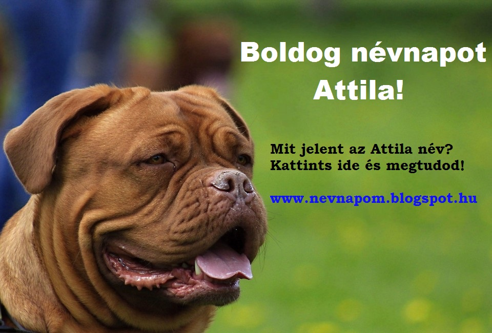 boldog attila Milyen névnap van ma?: Attila boldog attila