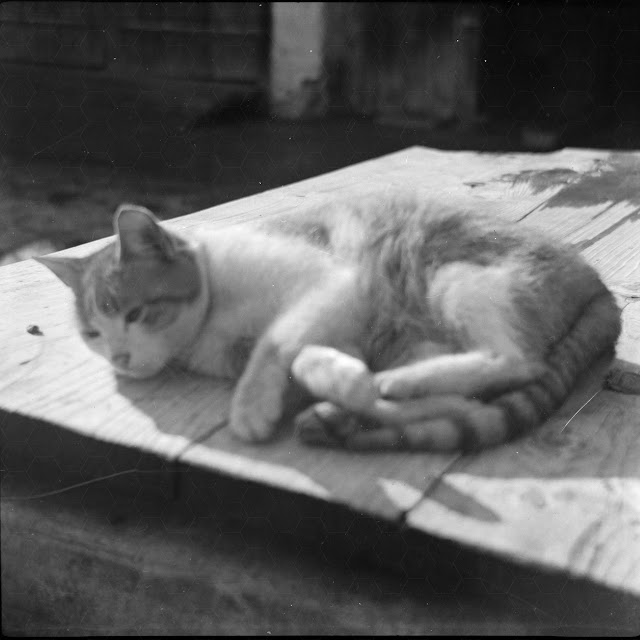 Katze auf Tisch beim Chillen - 1930-1950