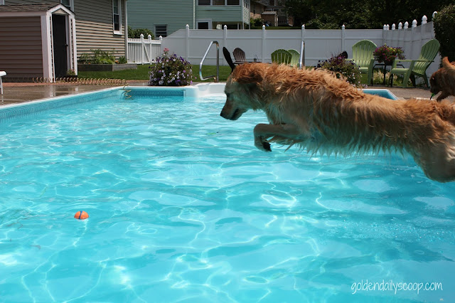 dog jumping into pool for ball, Natural Balance Natural Characters
