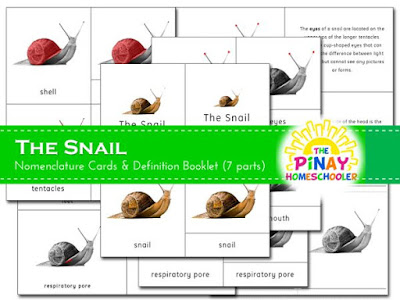 The Snail Definition and 3-Part Cards