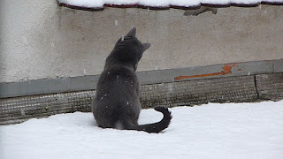 neige, site en refonte, chat, mignon, lol cat, grise, maya