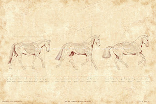 equine print by C. Twomey