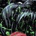 Venom #9 ve Carnage Born İnceleme