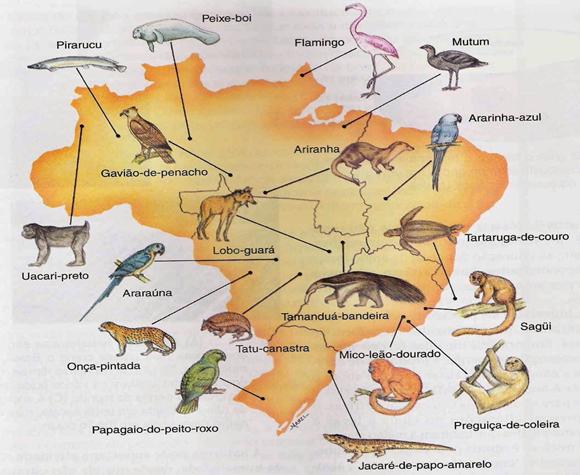 Mapa da nossa fauna