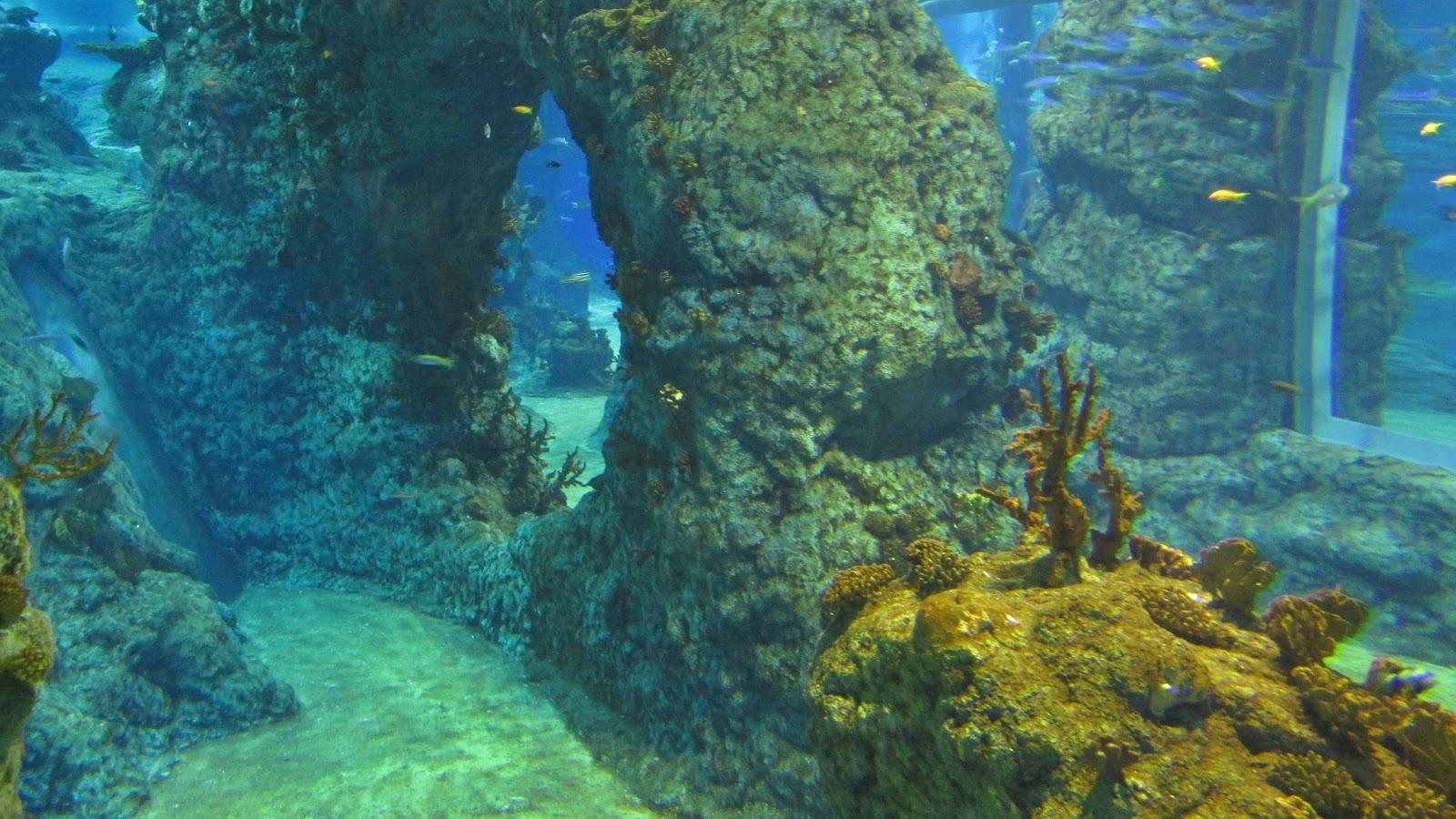 ZOO, rafa koralowa