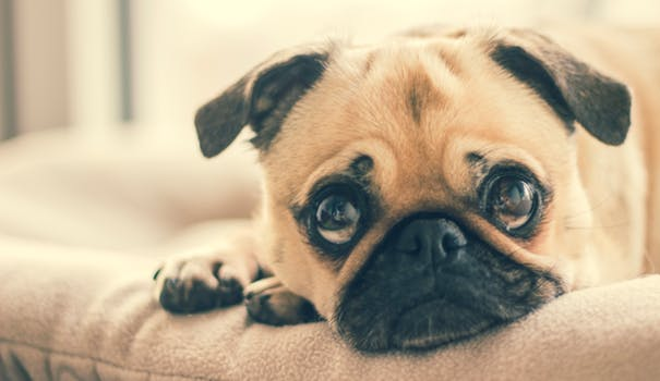 What to Do When Your Dog Has Diarrhea