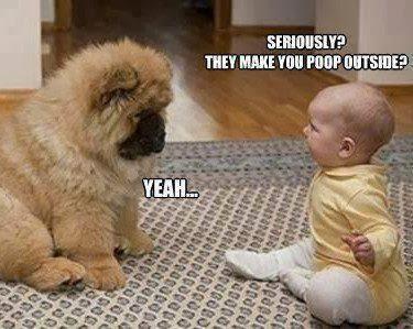hài hước chó mèo