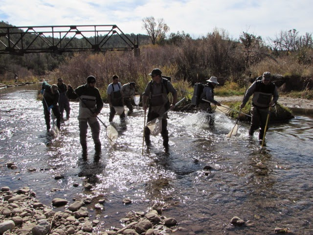 Outdoors nm pecos river on the mend latest fish count shows for Nm department of game and fish