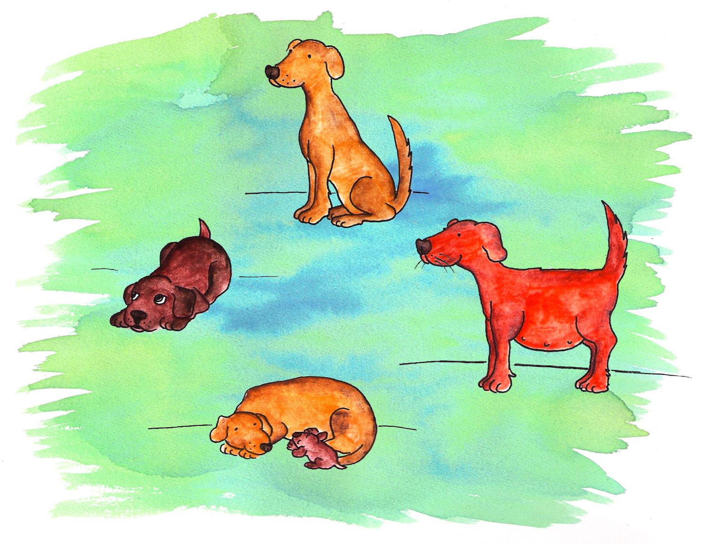De De Un Perro La Ciclo Vida