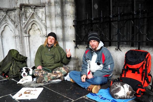 beggar dog cat