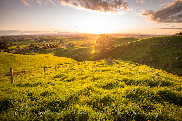 Sunflare and grassy hills Waikato sunset