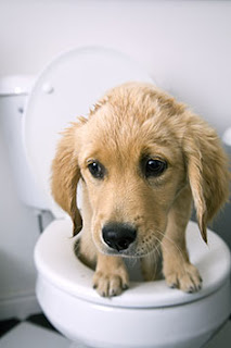 How To Stop Dog Diarrhea