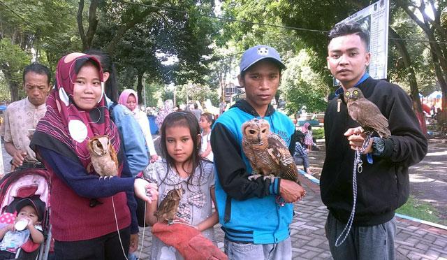 Komunitas burung hantu di Lumajang