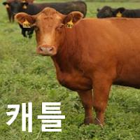 소고기 (생우) 가격 전망 : 기준 가격은 108.725 - 해외선물 Live Cattle, CME: LE