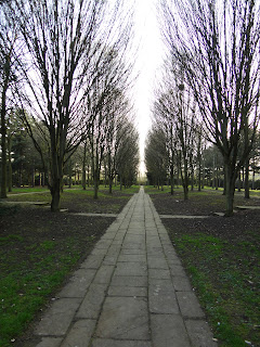 Looking Down The Milton Keynes Tree Cathedral