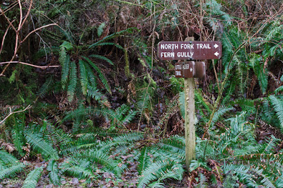 Fern Gully Trailhead