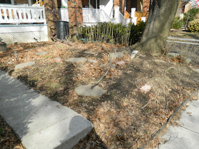 Paul Jung Gardening Services Toronto Gardening Company Davisville Mount Pleasant East Spring Front Garden Cleanup Before
