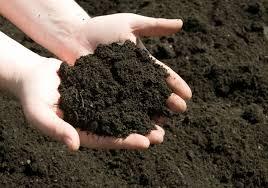 MEANING OF SOIL FERTILITY