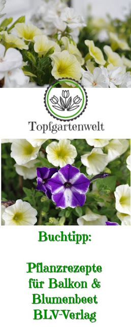 Gartenblog Topfgartenwelt Buchtipp Pflanzrezepte: Nachschlagewerk für die Gestaltung von Blumenkisterln und Beeten, erschienen im BLV-Verlag #Buchvorstellung #Gartenbuch #Balkonblumen