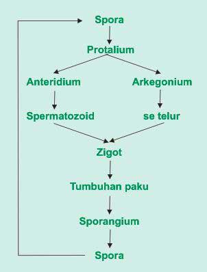 Pengertian Metamorfosis dan Metagenesis Makhluk Hidup