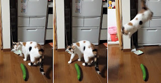 Cats And Cucumbers: Why Are Cats Afraid Of Cucumbers?