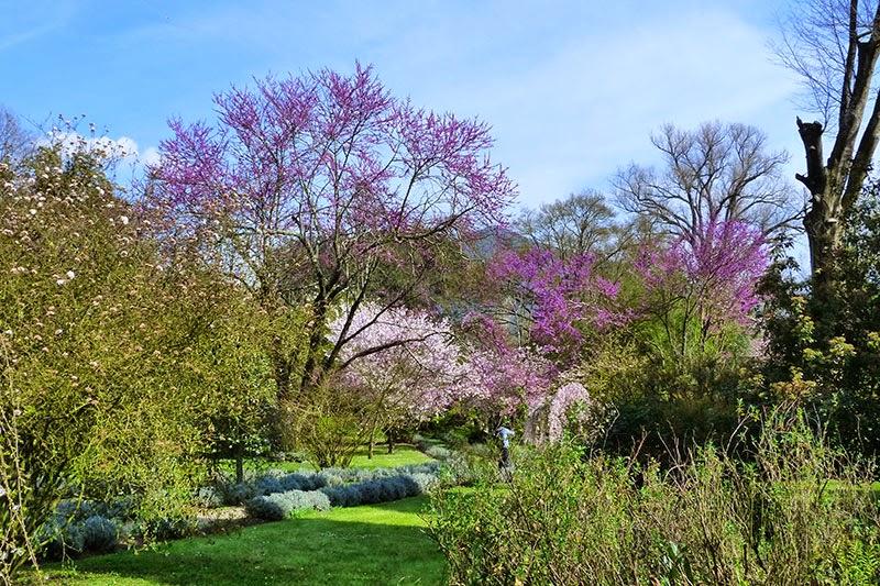 Quase primavera no Jardim de Ninfa