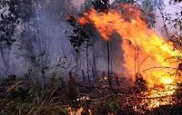 Terbakarnya Gunung Wilis, 25 Hektare Lahan Ludes