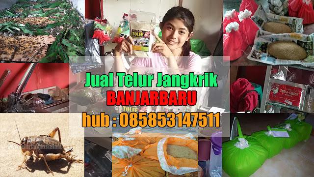 Jual Telur Jangkrik Banjarbaru Hubungi 085853147511