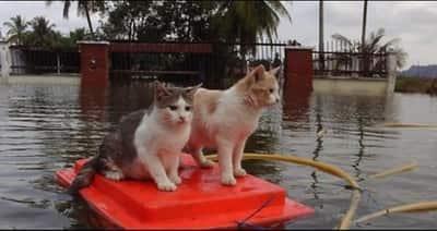JOHOR AMAZING STORIES - Flood season of Johor