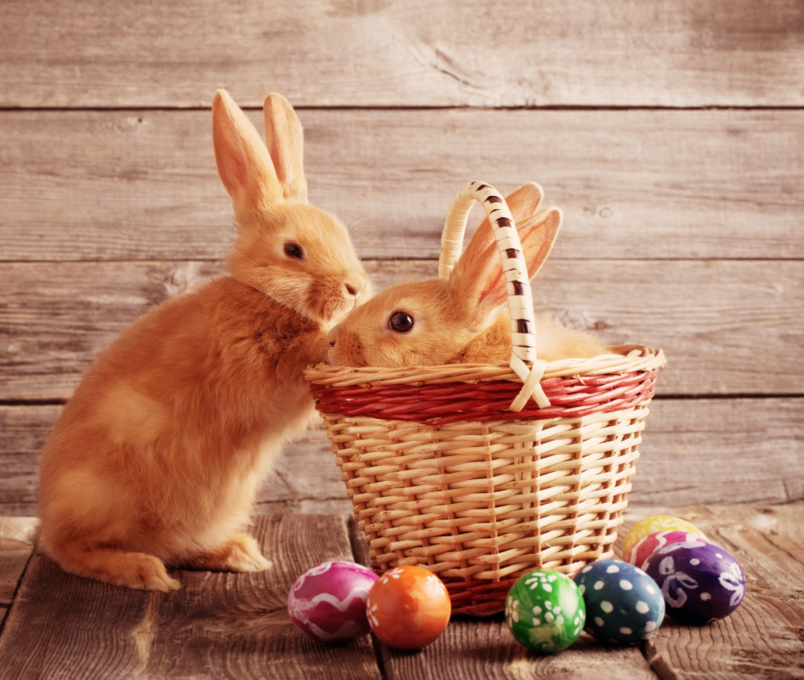 Unequally Yoked Marriage: Bunnies