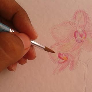 orquidea em aquarela