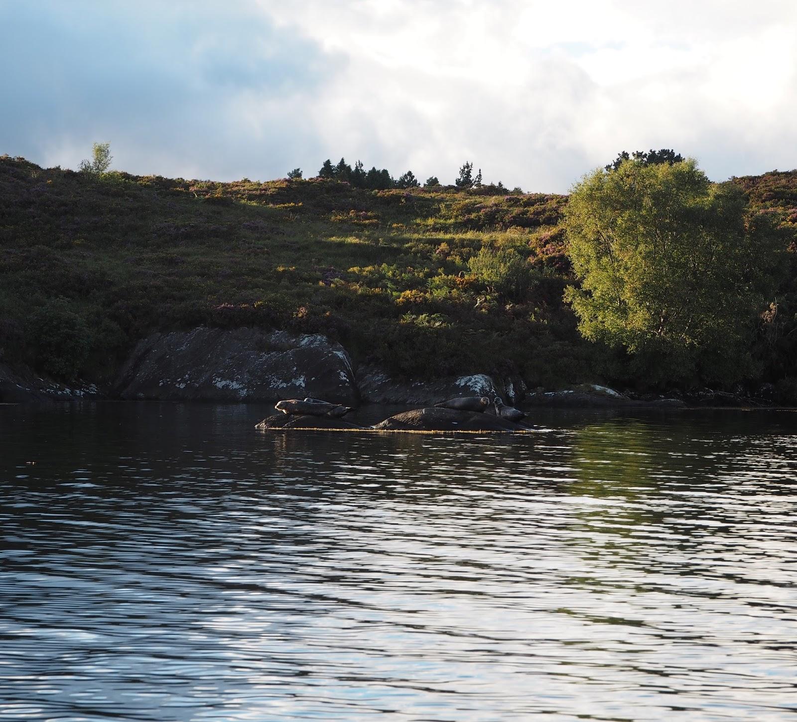 seal island ireland