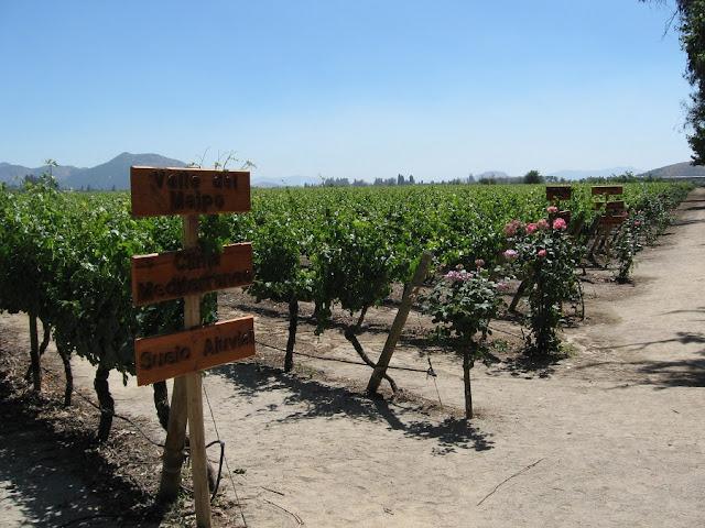Como visitar a vinícola Concha y Toro em Santiago do Chile