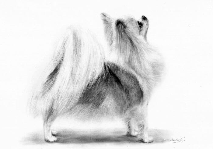 13-Long-haired-Chihuahua-Danguole-Serstinskaja-Animal-Dry-Brush-Technique-Paintings-www-designstack-co