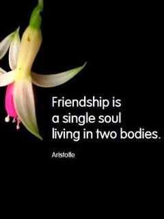 Awesome Stuffs Friendship Quotes Wallpapers