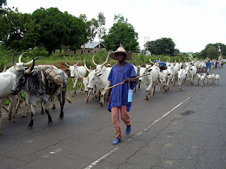 News: Benue! Why we are against cattle ranching – Fulani herdsmen