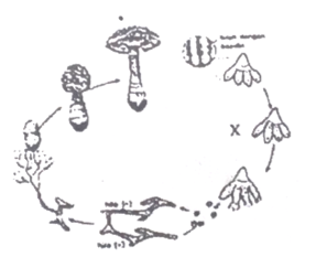 130 Soal Latihan +Prediksi UNBK Biologi SMA/MA Lengkap dengan Kunci Jawabannya Part-5